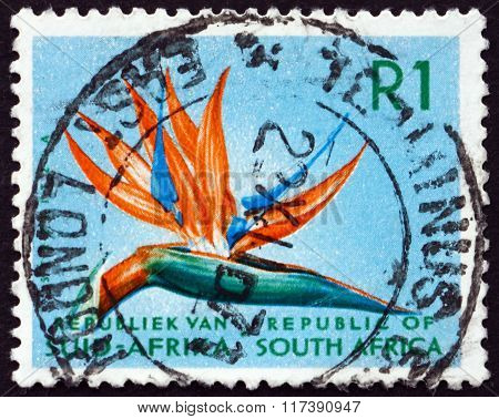 Postage Stamp South Africa 1961 Bird Of Paradise, Flowering Plan