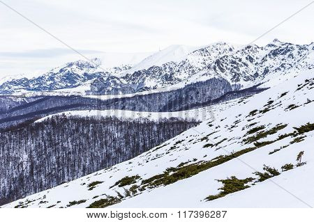 Balkan Mountains covered with snow during the winter. Forests with bluish trees. poster