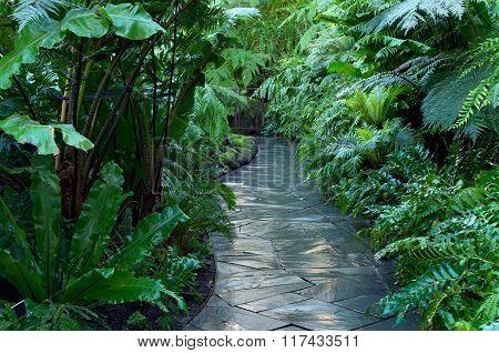 Walkway Through Fern Jungle