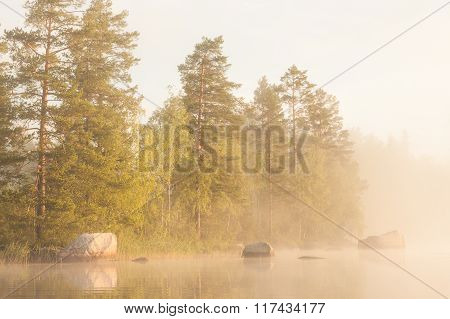 Forest by the lake and foggy morning
