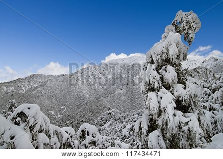 Heavy snow clumped on trees, Southern Alps, New Zealand