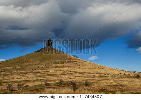 Lone tree on pointed hill top, farmland, New Zealand