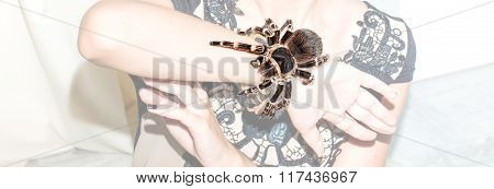Spider In The Hands Of