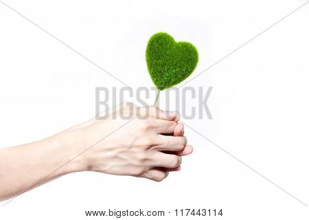 Human Hands Holding Tree In Heart-shape In White Isolated Background - Ecology And Environment Conce