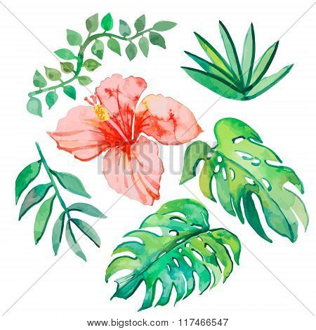 Tropical leaves isolated on white background. Tropical plants: exotic flower hibiscus and leaves. Ve