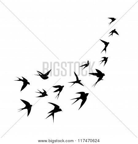 A flock of birds (swallows) go up.