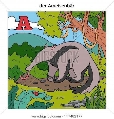 German Alphabet, Letter A (anteater And Background)