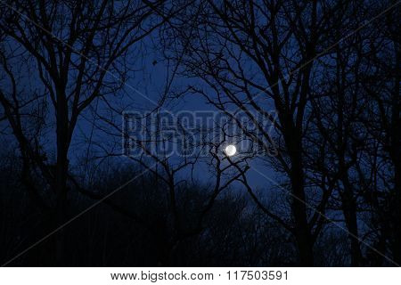 Morning Moon amidst Trees