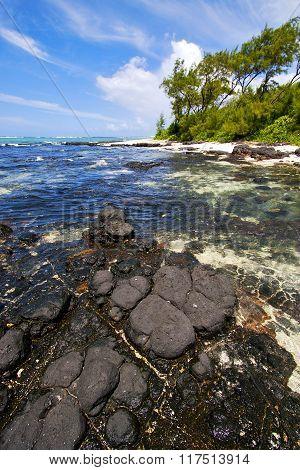 Blue Bay Foam  Of Deus Cocos In Mauritius