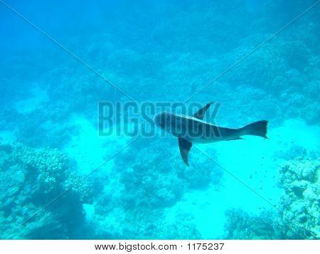 Fish In Open Water