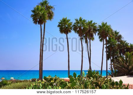Costa Calma beach of Jandia Fuerteventura palm trees  Canary Islands