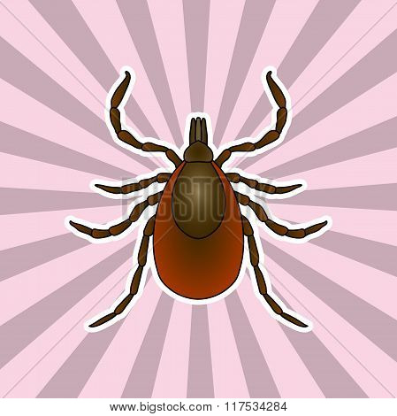 Insect anatomy. Sticker Tick parasite. Sketch of Tick. Mite.  Tick Design for coloring book. hand-dr