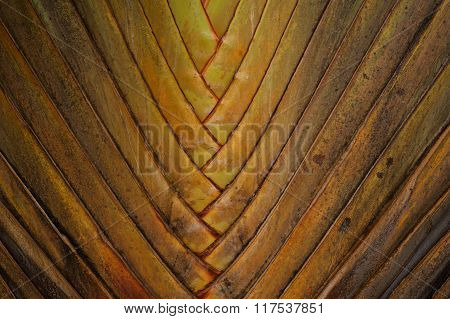 Traveller 's or Ravenala tree texture background poster