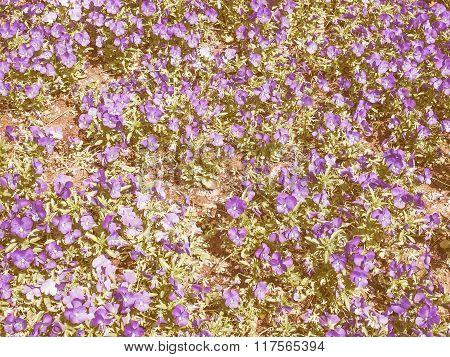 Retro Looking Viola Flower