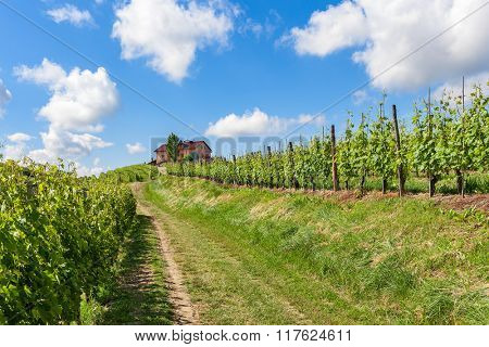 Rural road among green vineyards towards house on the hill under blue sky with white clouds in Piedmont, Northern Italy.