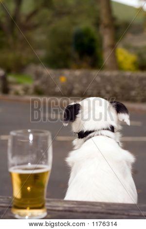 Dog And Pint