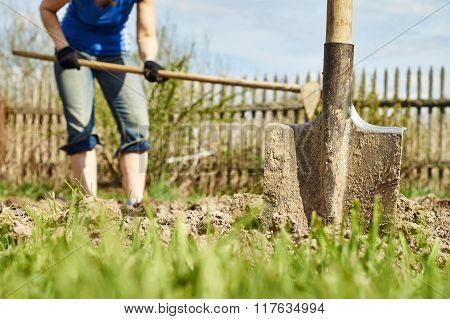 Spring planting potatoes