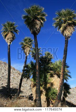 Mountain Palm Springs