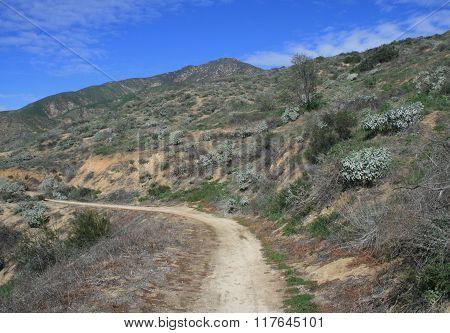 Shelton Trail