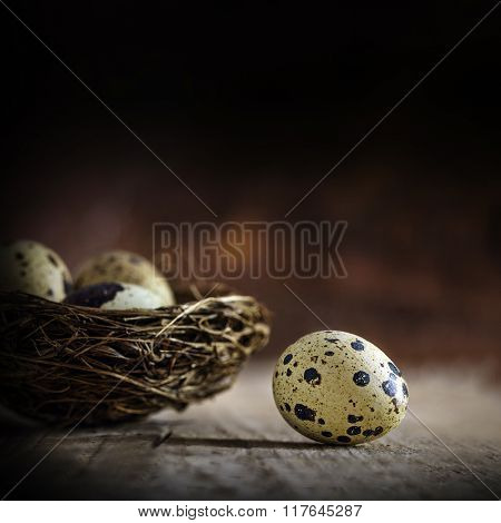 One Egg Gets Out, Three Eggs Stay In The Nest, Blurred In The Dark Background, Concept Still Life