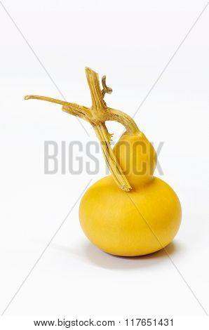 Chinese Calabash Gourd
