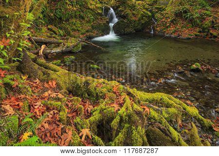 Hoh Rainforest, Olympic National Park, Washington state, USA
