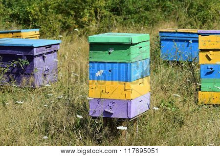 Small Apiary In The Foothills.