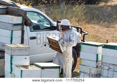 Beekeeper Hard At Work