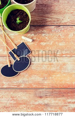 gardening and planting concept - close up of seedling and nameplates on table at home