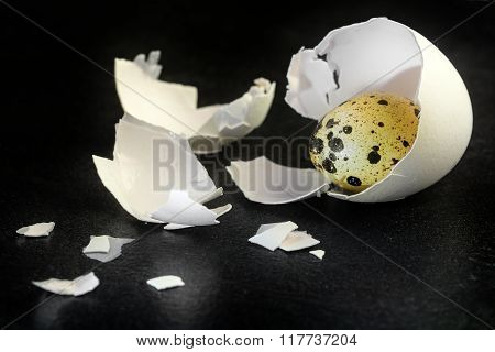 Quail Egg In A Chicken Eggshell On A Black Slate Background, Easter Concept Or Metaphor For Uncover