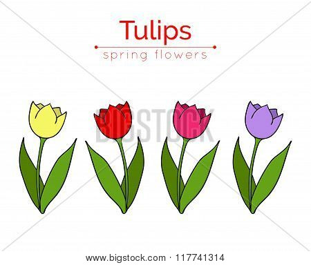 Set of vector tulips.