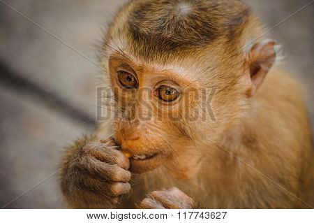 One Cute Baby Monkey Eating