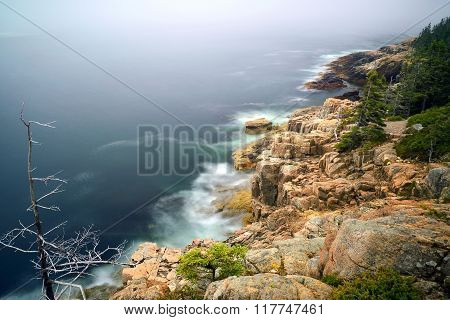Rocky Shoreline and Trees