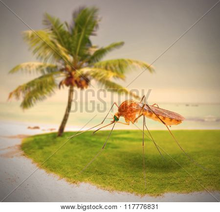 Mosquito on tropical beach, dangerous vehicle of zika, dengue, chikungunya, malaria and other infections. Digital artwork on pest and infection control theme.