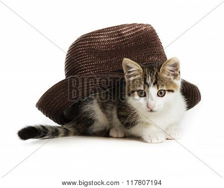 small kitten sits under a hat