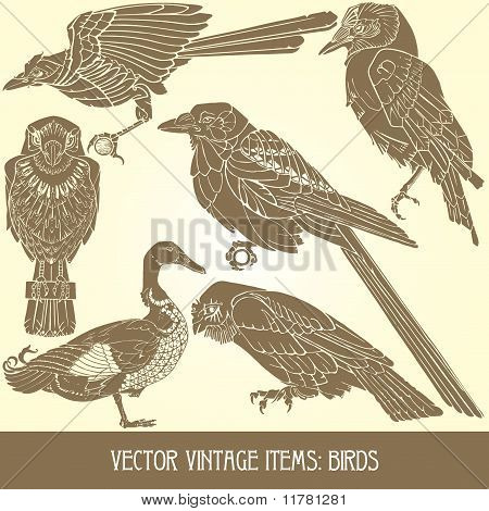 variety of vintage bird