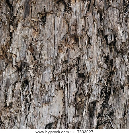 Natural Weathered Grey Taupe Brown Cut Tree Stump Texture, Large Vertical Detailed Wounded Damaged