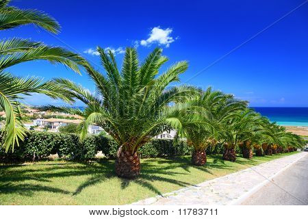 Palm Trees Planted In Row Along Mall Leading To Sea On Sunny Day