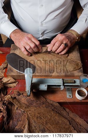 Torcedor rolling hand made cigars parejos using antique technique