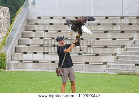 CARINTHIA, AUSTRIA - JULY 2015 : American Bald Eagle landing on falconer during the Eagle show at Adler Arena Burg Landskron castle in Villach city in Carinthia, Austria on July 14, 2015.
