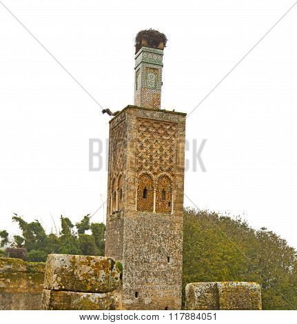 Chellah  In Morocco          Roman Deteriorated       And Site