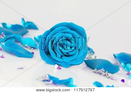 Dye Blue Rose With  Rose Petals