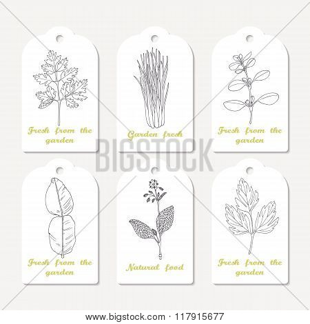 Tags collection with hand drawn spicy herbs. Sketched chervil, lovage, lemongrass, marjoram, kaffir