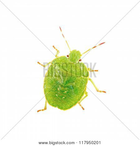 Green shield bug isolated on a white background