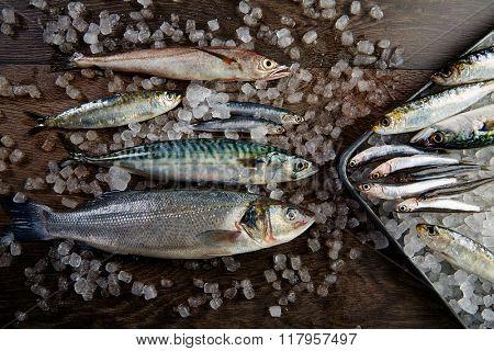 Fresh fishes mix hake seabass sardine mackerel anchovies on ice and wood