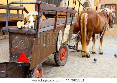 Dog on the old tourist cart in Dinkelsbuhl.