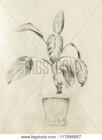 Hand drawn ropical plants. Plants Dieffenbachia sketch.