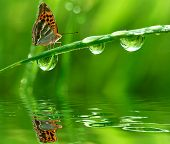 fresh grass with  morning dew and butterfly close up poster