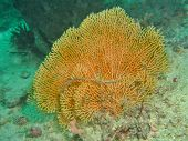 beautiful sea fan coral in the celebes sea poster