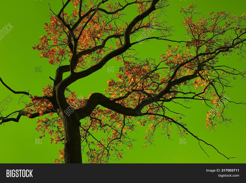 Incredible Colors Image & Photo (Free Trial) | Bigstock